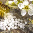 Globuli – kleine Kügelchen mit großer Wirkung?